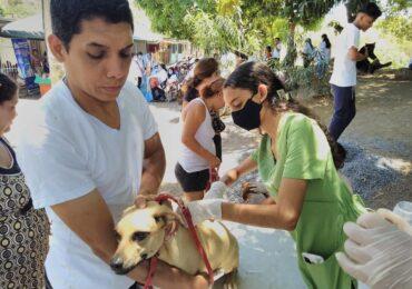 Consultas médicas a mascotas